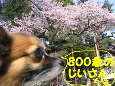20070404000953.jpg