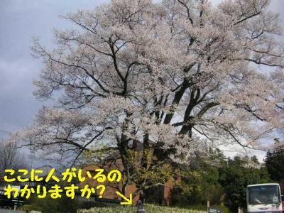 20070405001921.jpg