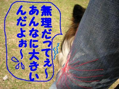 20070424221510.jpg