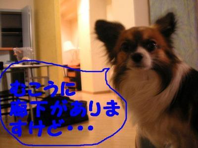 20070510195832.jpg