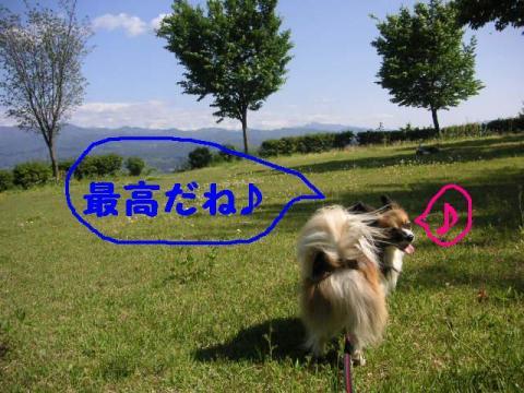 20070520204939.jpg