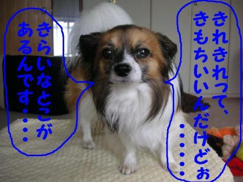 20070702161502.jpg