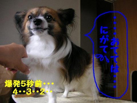 20070702163647.jpg