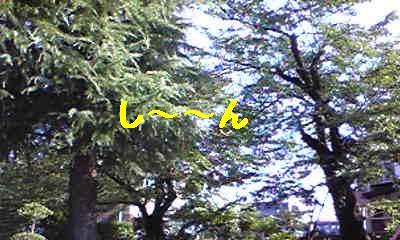 20070813203507.jpg