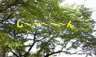 20070813203652.jpg
