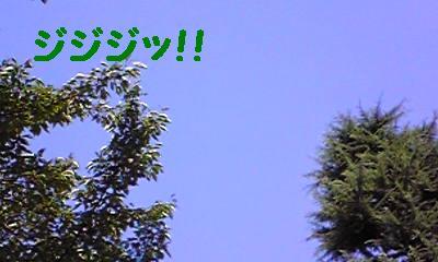 20070813205905.jpg