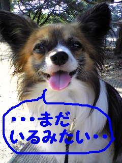 20070813210040.jpg