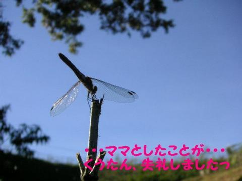20070919020114.jpg