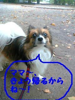 20070924201935.jpg