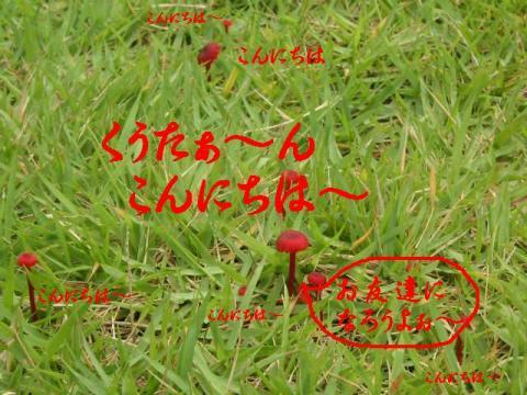 20071003204237.jpg