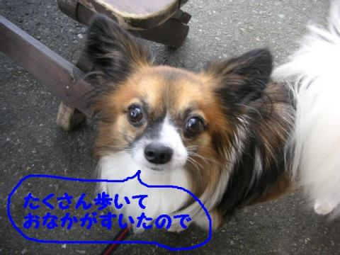20071007214959.jpg