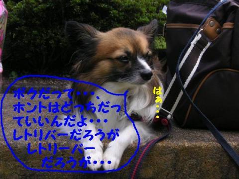 20071013214958.jpg
