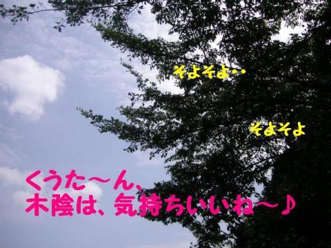 29-16.jpg