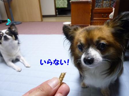 2011夏☆お里-2