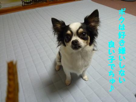 2011夏☆お里-3