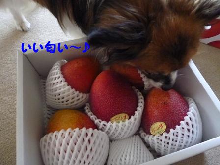 2011夏☆マンゴー-2