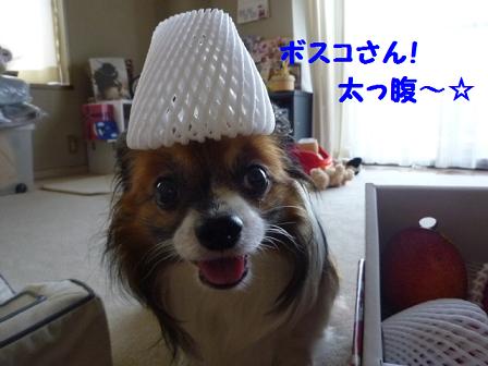 2011夏☆マンゴー-4