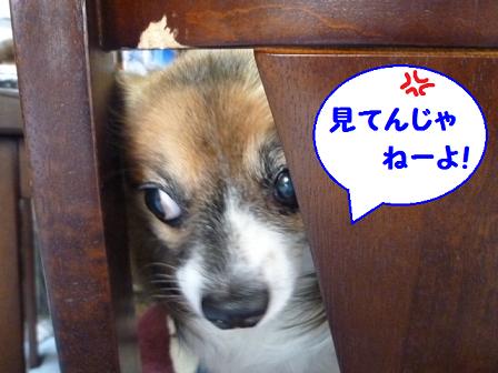 2011夏☆お里-6