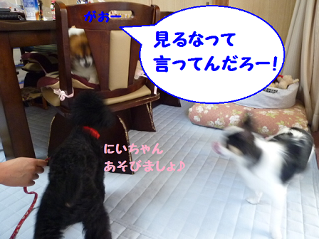 2011夏☆お里-7