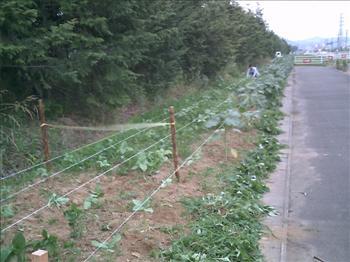 ひまわりH200628-02