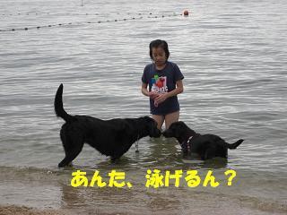 赤ちゃんやのに泳げるん?