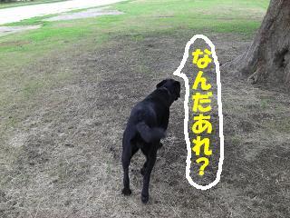 あれはなんて言う犬や?