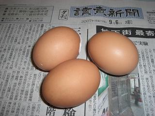 新鮮産みたて卵♪
