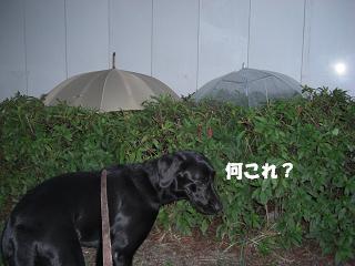 家に傘ないから持って帰ろうか?