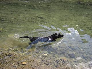ス~イスイ♪泳ぎなんて簡単ね~