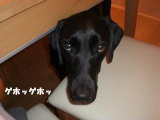 アタシ病気やねんで~優しくして!