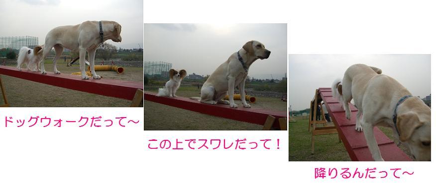 CIMG0754w.jpg