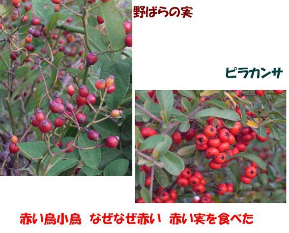 CIMG4290w.jpg