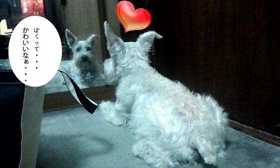 leo_wtih_mirror.png