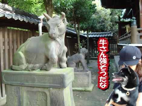 04_usijima1.jpg