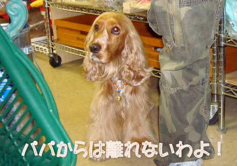 07-7-16_haruka2.jpg