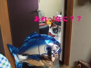 DSCF1206.jpg