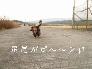 P1020068_ks.jpg