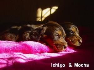 ichigomocha_ks.jpg