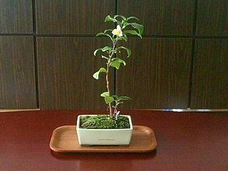 マン盆栽の盆ちゃんです