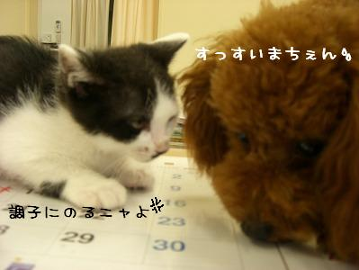20070609_6.jpg