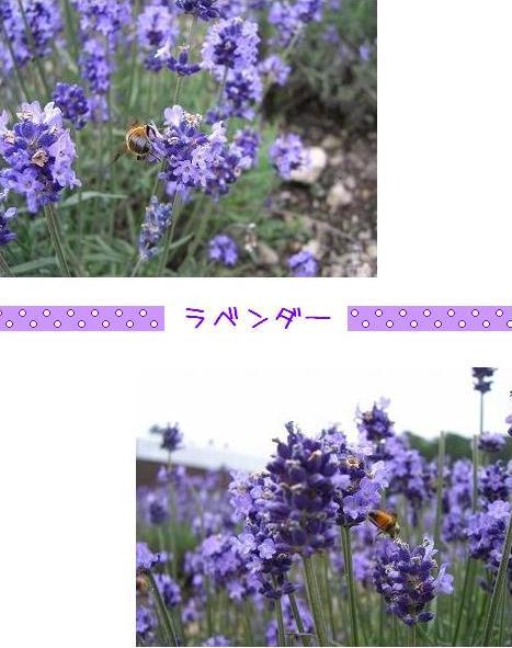 20070804_3.jpg
