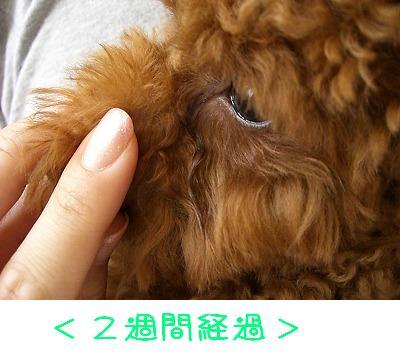 20070807_4.jpg
