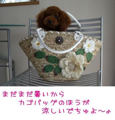 20070819_7.jpg