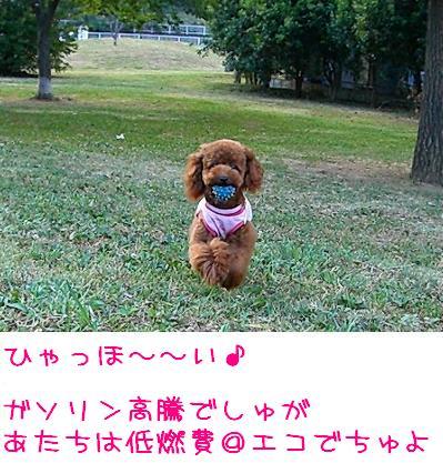 20070905_5.jpg