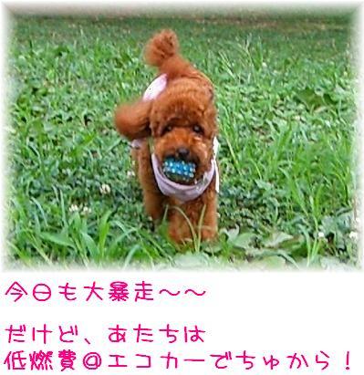20070913_2.jpg