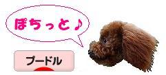 20070913_b.jpg