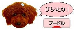 20070914_b.jpg