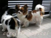 るーしーと子犬