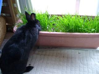 オリの大好き牧草だ~