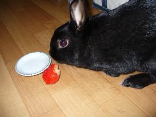 このイチゴはいまいちだ!!